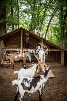 Parc du Thot - Mini-ferme -  - © Dan Courtice