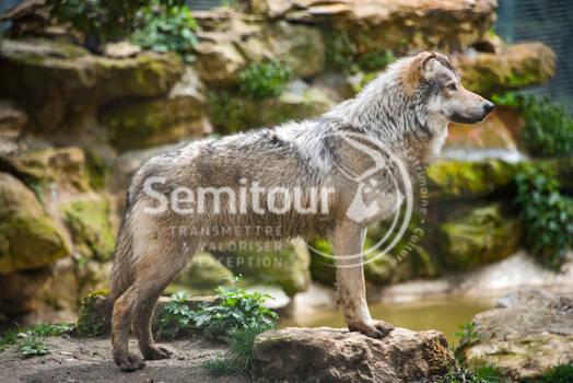 c-semitour-thot-atelier-et-loups-dan-9600.jpg